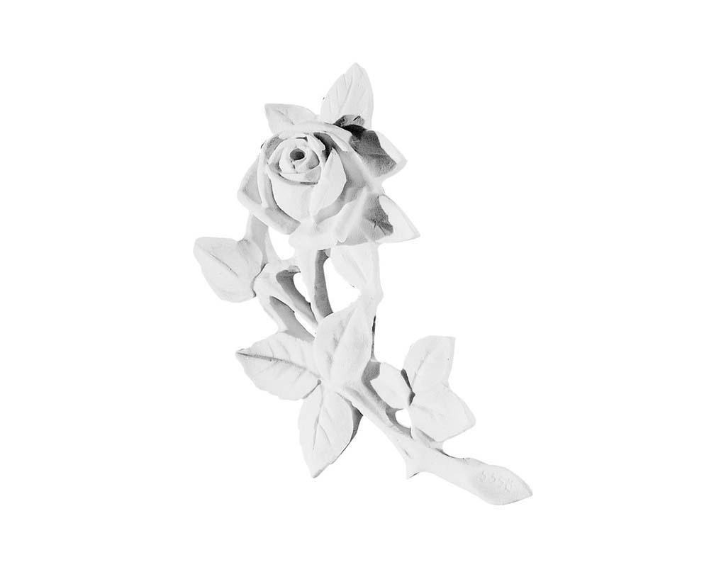 Róża 558